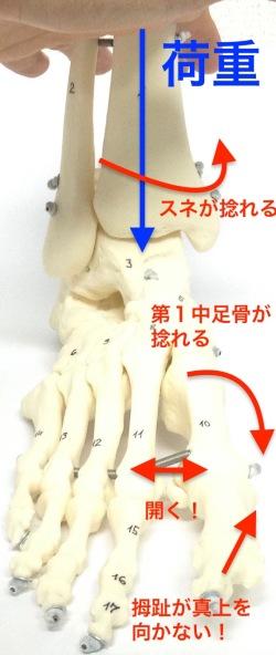 前額面_CKC 2.jpg